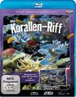 Korallen-Riff